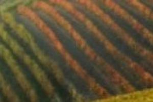 Piano regolatore per la conservazione dei territori vinicoli e redditività economica delle cantine da tutelare: come mettere insieme questi due aspetti? Il pensiero di Attilia Peano, architetto e ordinario di Urbanistica al Politecnico di Torino