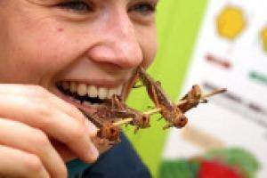 """Ecco """"A tavola con gli insetti"""", un libro che nasce """"dal dibattito sull'alimentazione che accompagna l'Expo, compresi gli insetti, analizzati da ogni punto di vista, alimentare e sociale"""". Come racconta a WineNews uno dei due autori, Giovanni Sogari"""
