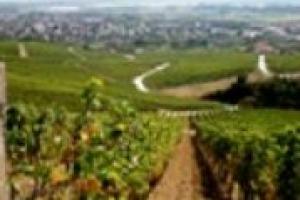 E se il Tokaj, da sempre al centro della disputa enoica che divide Italia ed Ungheria, fosse in realtà il frutto di un vero e proprio ''melting pot'' vinicolo? A WineNews il professor Erno Peter Botos della Corvinus University di Budapest