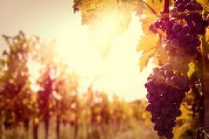 Il cambiamento climatico e gli impatti sulla viticultura mondiale al centro di Wine2Wine, con le parole di Luigi Mariani (climatologo Università di Milano), Attilio Scienza, Nathalie Ollat (Università di Bordeaux) e Riccardo Cotarella