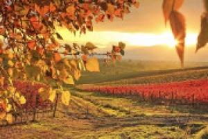 Caldo e siccità fanno gridare all'emergenza idrica, ma il cambiamento climatico è ormai in atto, ed anche in agricoltura bisogna prendere provvedimenti in maniera strutturale. A WineNews le parole del climatologo Luigi Mariani (Università di Milano)