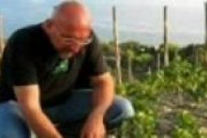 Un caso di ''ordinaria follia'' burocratica: la cantina De Conciliis, realtà top della viticoltura del Cilento, rinuncia alla ''Dop'' per le troppe difficoltà burocratiche. E ''declassa'' il vino perché il mercato, in ogni caso, richiede il prodotto