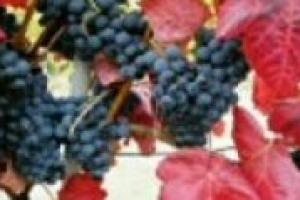 Il mondo del vino italiano ha tutte le opportunità e potenzialità per proporsi come terreno avanzato di sperimentazione ed innovazione. Ma è proprio così? A WineNews il segretario generale della Fondazione per le eccellenze italiane, Fabio Renzi