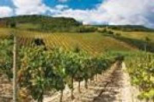 """La cooperazione vitivinicola, in Italia, rappresenta oltre il 50% di tutto il vino prodotto nel Belpaese. Lo stato dell'arte di questo """"settore nel settore"""" nelle parole di Giuseppe Battistuzzi, dell'area enologica dell'Alleanza delle Cooperative"""