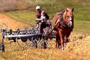 """La riscoperta dei contadini veri, quelli che il processo di industrializzazione dell'agricoltura """"sta facendo sparire"""", la dimensione sacrale del lavoro agricolo, l'agricoltura come """"scuola di liberazione"""": parla la """"pasionaria"""" Silvia-Pérez Vitoria"""
