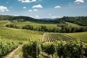 """Tra vino, territorio e arte, come possono gli attori della filiera contribuire al progresso socioeconomico della """"buona Italia""""? A WineNews le risposte di Roberta Pezzetti (Uninsubria), autrice del rapporto sul tema per il Consorzio del Gavi"""