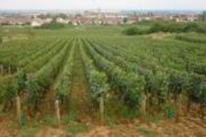 La ricerca diventa anche un'operazione di marketing … La sperimentazione in vigna quale valore aggiunto può portare al mercato dei vini? Lo abbiamo chiesto ai professori Diego Begalli, Angelo Spena e Maurizio Boselli dell'Università di Verona