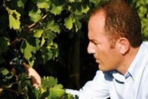 """""""I dati del vino italiano nella prima metà del 2016 sono positivi. Ma serve attenzione: il mercato mondiale è competitivo, i fondi promozione vanno spesi in promozione. E le regole sugli impianti riviste"""": così il presidente Uiv Antonio Rallo"""