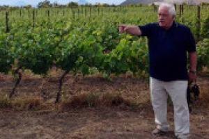 """Il futuro della viticoltura italiana, ed europea, nelle riflessioni, a WineNews, del professor Attilio Scienza. """"Il cambiamento climatico va affrontato, puntando sulla genetica, sulla ricerca e su una viticoltura diversa, imparando dalla storia"""""""