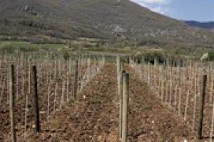 """Il """"Progetto Magis"""", il protocollo per la sostenibilità della produzione del vino in Italia, compie i suoi primi 5 anni. Come è partito, dove è arrivato e dove arriverà? La parola al professor Attilio Scienza, e Gian Luca Mascellino di Bayer"""