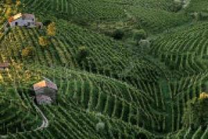 """""""Piuttosto che a lanciare accuse, episodi come quello di Refrontolo, devono servire per tornare a discutere, in maniera positiva, della gestione complessiva dei territori agricoli e vitivinicoli"""". Così a WineNews il professor Attilio Scienza"""