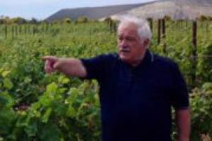 """""""Il futuro della viticoltura e della sostenibilità della filiera del vino passa dalla ricerca genetica, per varietà di vite più resistenti alle malattie da creare senza però ricorrere agli Ogm"""": a WineNews Attilio Scienza (Università di Milano)"""