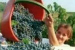 La vendemmia dei rossi entra nel vivo nella maggior parte delle denominazioni del Belpaese: qual è lo stato dell'arte? WineNews lo ha chiesto al professor Loeonardo Valenti, ordinario di enologia all'Università di Milano