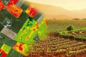 """""""Con la """"viticoltura di precisione"""" si fa una mappatura delle condizioni di vegetazioni del vigneto. Si può così trattare la vigna in maniera scientifica e mirata"""". A Winenews il professore di Viticoltura all'Università di Milano, Leonardo Valenti"""