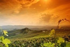 Grazie ad export e bollicine, pur non senza difficoltà, anche il 2014 è stato un anno positivo per il vino italiano. E si guarda al 2015 con ottimismo. Così a Winenews cantine come Zonin, Donnafugata, Masi, Ferrari, Marchesi di Barolo e Salcheto