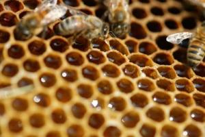 Allarme di ricercatori e apicoltori: da qui a 100 anni potremmo dover dire addio al miele, che paga le gravi conseguenze del riscaldamento globale, minaccia costante per gli impollinatori: nel 2017, la siccità ha causato un crollo produttivo del -80%