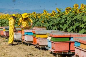 """L'apicoltura è in crisi, gli apicoltori si ingegnano: nasce NoMaDi-app, progetto pilota per monitorare a distanza gli alveari grazie ai dati inviati dalle api """"climatologhe"""". Arriva dalla Toscana, Regione più colpita da crollo della produzione 2017"""