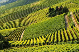 """La riscossa della Barbera d'Asti e dei vini del Monferrato: cresce l'imbottigliato, ma anche la remunerazione di uve e sfusi, e tornano a crescere anche gli ettari vitati. Il 2017 """"letto"""" a WineNews dal presidente Filippo Mobrici"""