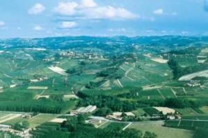Over 2 million euros for half a hectare in Barolo
