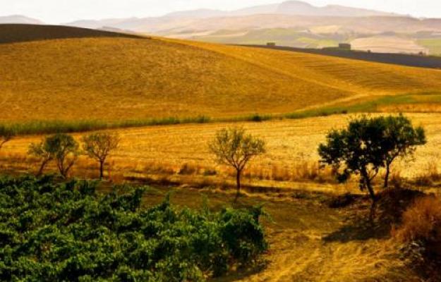 """Limiti strutturali e mercato """"strozzano"""" il grano italiano ..."""