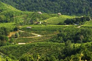 """Unesco, prima bocciatura al dossier de """"Le colline del prosecco di Conegliano e Valdobbiaddene"""""""
