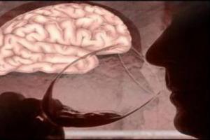 """Due bicchieri di vino (e non di più) al giorno aiutano a """"ripulire"""" il cervello. Uno studio dell'Università di Rochester Medical Center dimostra come bere poco alcol aiuti il sistema glinfatico a smaltire le tossine accumulate dalla materia grigia"""