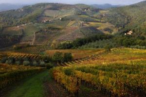 """Il """"Gallo Nero"""" canta all'Unesco: il Consorzio del Chianti Classico (con la Fondazione per Tutela del Territorio) lancia l'idea della candidatura del territorio a Patrimonio immateriale tra vino, paesaggi, risorse culturali, storiche, architettoniche"""