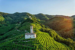 Districts OK in Italy, wine on top