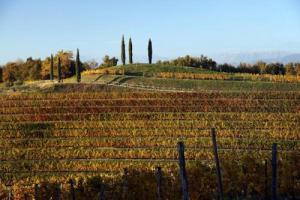"""25 milioni di euro in più per investimenti e ristrutturazione dei vigneti, mentre le """"assicurazioni uva da vino"""" passano dall'Ocm ai Psr: in Stato-Regioni via libera al Piano Nazionale di Sostengo per 2019-2023, annunciano le Cooperative"""