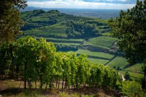 Economia, ambiente, arte, politica: il 2017 del vino italiano è stato un anno ricco di fatti e novità. Da ripercorrere insieme a WineNews, a spasso tra acquisizioni, export, classifiche e tendenze che hanno dato un volto nuovo all'Italia enoica