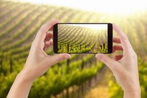 """Da gestione del vigneto ai processi di vinificazione e certificazione, alla comunicazione della cantina, """"l'Internet of Things"""" (IoT) conquista il vino. A raccontarlo Valoritalia & Federdoc"""