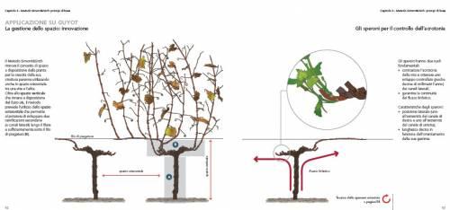 Codificare e divulgare in maniera multimediale e per tutti il metodo di potatura che sta - Potatura uva da tavola ...