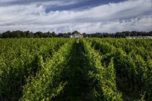 I passaggi di mano di cantine e aziende vinicole sono, ormai, all'ordine del giorno, e in ogni angolo del mondo: la messicana Rivero-González compra Martha Clara, a New York
