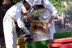 """""""Settimana del Miele"""" (Montalcino, 8-10 settembre) - Conoscere l'universo delle api, scoprire cosa c'è dietro al vasetto, apprendere i segreti del mestiere di apicoltore, tra degustazioni, minicorsi, """"alveari aperti"""" e apiterapia"""