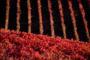 """Il progetto """"Grape Assistance"""" del Consorzio Vini di Montefalco, che ha portato ad una riduzione del 40% dei fitofarmaci in vigna, modello per l'Umbria: obiettivo il -75% di fitofarmaci nella Regione, con un risparmio di 60 milioni di euro"""