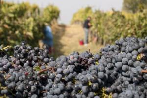 """Dal """"modello Salcheto"""" alla sostenibilità ambientale, economica e sociale di un intero territorio del vino: nel Nobile di Montepulciano ecco il progetto """"SosteNobilEtà"""". Michele Manelli: """"obiettivo distretto entro la fine del 2018"""""""