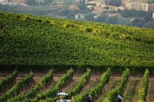 Cinque stelle alla difficile 2017 del Nobile, che nel calice presenta una 2015 caratterizzata dalla grande interpretazione stilistica e complessità... Montepulciano, uno dei territori del vino d'Italia più citati nella storia, cresce con investimenti