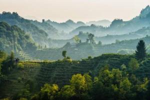"""Sempre più internazionale, ma in crescita anche in Italia, e sempre più sostenibile: il Conegliano Valdobbiadene Prosecco Superiore Docg, nel suo """"Rapporto Annuale di Distretto"""". Nel 2017 93 milioni di bottiglie vendute per 520 milioni di fatturato"""
