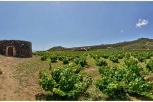 I Giardini Panteschi di Pantelleria, restaurati dalla griffe del vino siciliano Donnafugata nel 2008, diventano un esempio di gestione sostenibile delle risorse idriche, e saranno protagonisti, con José Rallo, al Convegno Nazionale Fai di Palermo