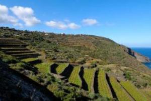 """Il mare, il vento, la vite ad alberello coltivata sul terreno pantesco già dichiarata Patrimonio Unesco: Pantelleria è Parco Nazionale, il primo in Sicilia. Antonio e Josè Rallo (Donnafugata): """"scelta di civiltà, svolta per agricoltura e turismo"""""""