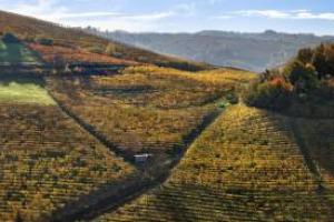 """Nel """"Risiko"""" che sta ridisegnando le proprietà di Langa, anche le piccole realtà si muovono: l'azienda Alessandro Rivetto, con una produzione di 80.000 bottiglie, ha acquisito 6 ettari di vigneto a Barbaresco ad Alba, nei """"cru"""" Montersino e Meruzzano"""