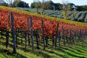 """""""La """"Sagrantino Stage"""" sarà spettacolare per i territori toccati e la valenza tecnica. È il quarto anno al Giro d'Italia di una Tappa del Vino"""": così il direttore Mauro Vegni. A WineNews: """"in futuro allargheremo a territori simbolo della gastronomia"""""""