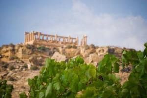 Il Parco Archeologico di Selinunte, il più grande d'Europa, continua a legarsi al mondo agricolo: dopo il sostegno della Cantina Settesoli, ora arriva il protocollo con Coldiretti per riportare ulivi, vigne e grano nei 300 ettari del parco