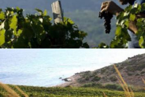 Sicily en Primeur: history, research and chalices