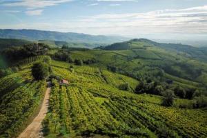 Le colline vitate del Soave, primo paesaggio rurale di interesse storico d'Italia, cominciano il cammino verso la prima candidatura tricolore al sistema GIAHS della FAO, grazie anche alla fondamentale tutela del territorio da parte del Consorzio