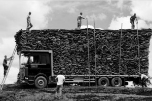 Tra sostenibilità, marketing e informazioni che sfatano falsi miti: il sughero ed il suo ruolo per vino e ambiente entra nelle Università grazie ad Apcor (Associazione Portoghese Produttori Sughero), come racconta Carlos Dos Santos (Amorim Cork)