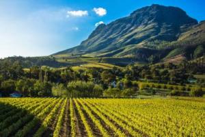 """Se la Cina guarda alla Francia, la Francia punta sul Sud Africa: la storica cantina Stellenbosch Vineyards nelle mani di AdVini, tra i principali gruppi enoici d'Oltralpe, nel """"Golden Triangle"""""""