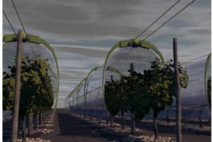 Una barriera fisica rimovibile sopra i filari per limitare l'uso di fitofarmaci e proteggere le viti dal gelo. Così la Francia del vino risponde ai rischi climatici e sperimenta nel bordolese con FranceAgriMer e InnoVin il Viti-Tunnel di Mo.Del