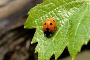 Si rinnova l'accordo tra FederBio e WWF: obiettivo 40% di superfici agricole bio nel 2030