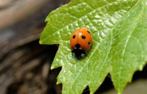AGRICOLTURA BIOLOGICA, FEDERBIO, WWF, Non Solo Vino